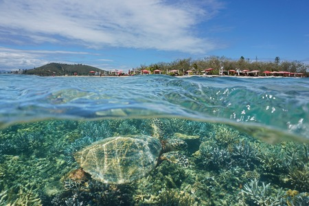 south pacific ocean: A hawksbill sea turtle underwater and islet Canard over the water split by waterline, New Caledonia, Noumea, south Pacific ocean