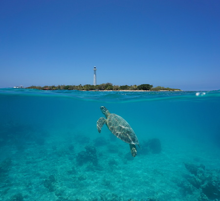 south pacific ocean: A green sea turtle underwater with Amedee island and lighthouse over the water split by waterline, New Caledonia, Noumea, south Pacific ocean