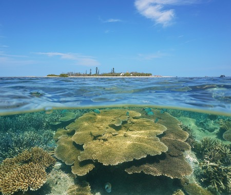south pacific ocean: Reef with table coral underwater and Canard islet over the water split by waterline, New Caledonia, Noumea, south Pacific ocean Stock Photo