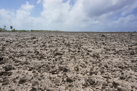 regularly: Desert landscape on the rim of the atoll of Tikehau in a part regularly covered by the sea, Tuamotu archipelago, French Polynesia, Pacific ocean