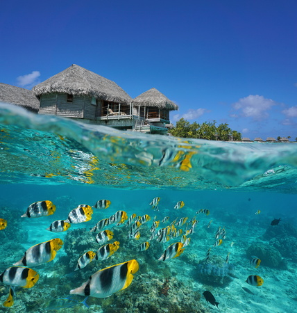 atoll: Half and half, tropical bungalow over the water with a school of fish underwater, French Polynesia, Tikehau atoll, Pacific ocean
