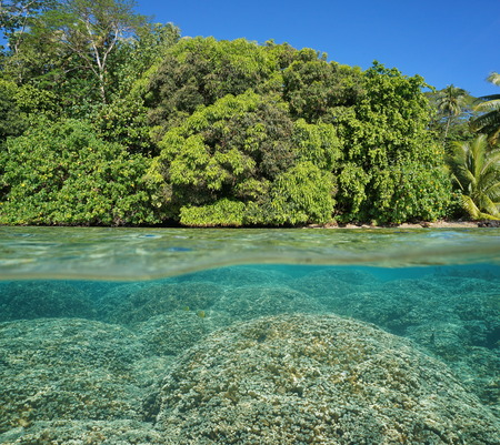 pristine corals: Half and half over and under the water surface, lush foliage on tropical shore and Porites rus corals underwater split by waterline, Pacific ocean, French Polynesia, Huahine island