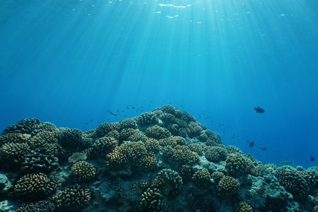 Pacific ocean sunlight underwater with corals and fish, natural scene on the outer reef of Huahine island, French Polynesia Stock Photo