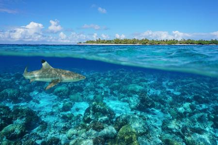 Over en onder zeeoppervlak met een eiland en een haai onderwater, Tiputa-pas, Rangiroa-atol, Tuamotu, Frans-Polynesië, Stille Oceaan Stockfoto