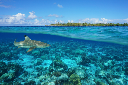 Over and under sea surface with an island and a shark underwater, Tiputa pass, Rangiroa atoll, Tuamotu, French Polynesia, Pacific ocean