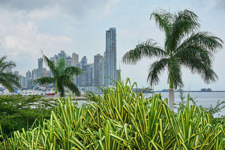 Skyscrapers with palm trees and pandanus plants in foreground, Panama City, Panama, Central America