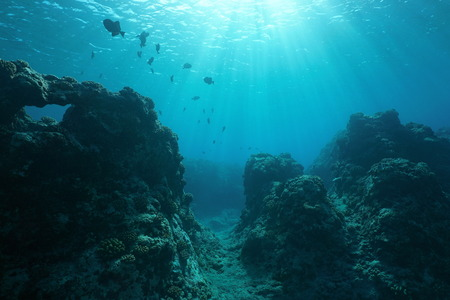 Pacific ocean floor underwater seascape with some fish and natural sunlight through water surface, fore reef of Huahine island, French Polynesia