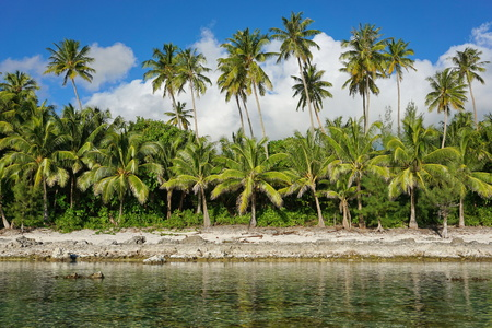 Coconut palm trees on the shoreline, Huahine island, French Polynesia, south Pacific Stock Photo