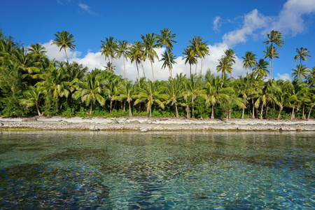 Tropical seashore, coconut palm trees on unspoiled coast of Huahine island, French Polynesia, south Pacific