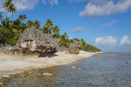geological formation: Atoll of Tikehau coastal landscape with coconut trees and eroded rocks on the seashore, Tuamotus archipelago, French Polynesia, Pacific ocean