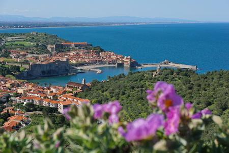 The medieval village of Collioure on the shore of the Mediterranean sea in the south of France, seen from the heights, Languedoc Roussillon, Pyrenees Orientales