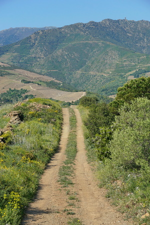 roussillon: Path in the campaign leading to the mountains of Albera Massif, Banyuls sur Mer, Pyrenees Orientales, Roussillon, south of France