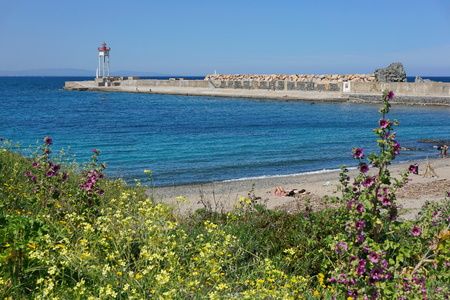 port vendres: Jetty with a lighthouse and beach with flowers in foreground, Port Vendres harbor, Cote Vermeille, Mediterranean sea, Roussillon, Pyrenees Orientales, France