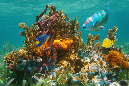 Colorful tropical marine life underwater with fish, coral and sponges, Atlantic ocean, Bahamas