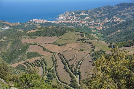 vermilion coast: Landscape over vinyards fields and the coastal town of Banyuls-sur-Mer, south of France, Mediterranean sea, Pyrenees Orientales