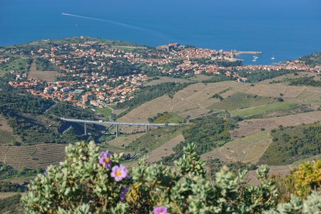 vermilion coast: Landscape of the coastal village of Collioure with vineyards fields and the Mediterranean sea, seen from the heights, south of France, Roussillon, Pyrenees Orientales