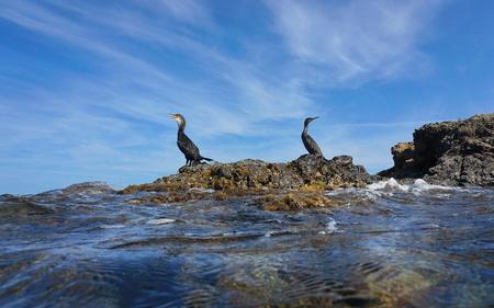 Two cormorants birds resting on a rock on the seashore, seen from water surface, Mediterranean sea, Spain, Costa Brava, El Port de la Selva, Girona, Catalonia Stock Photo