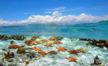 Seascape over and under water surface cloudy blue sky with starfishes underwater Stock Photo