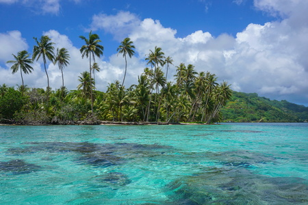 French Polynesia coconut palm trees on the motu Vavaratea and turquoise water of the lagoon, Huahine island, Faie, south Pacific ocean, Oceania