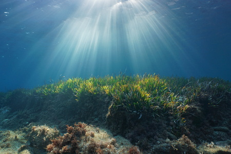 Natural sunbeams underwater through water surface in the Mediterranean sea on a seabed with neptune grass, Catalonia, Roses, Costa Brava, Spain 스톡 콘텐츠