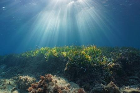 Rayons de soleil naturels sous l'eau à travers la surface de l'eau dans la mer Méditerranée sur un fond marin avec de l'herbe de Neptune, Catalogne, Roses, Costa Brava, Espagne