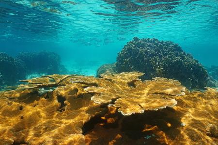 Caribbean sea underwater shallow coral reef, Bastimentos national marine park, Bocas del Toro, Panama, Central America Stock Photo
