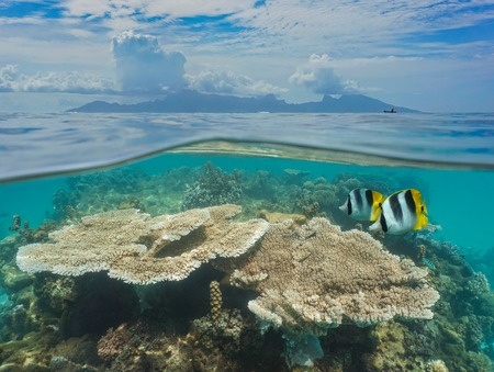 Over and under sea surface French Polynesia Moorea island at the horizon with coral and fish underwater, seen from the lagoon of Tahiti, Pacific ocean