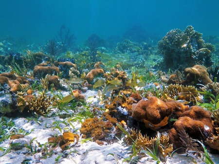 Coral reef and fish in the Caribbean sea, Central America, Panama Stock Photo
