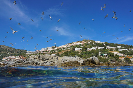 Mediterranean gulls flying over a rocky seashore with buildings in background, seen from water surface, Spain, Costa Brava, Catalonia, Roses, Girona
