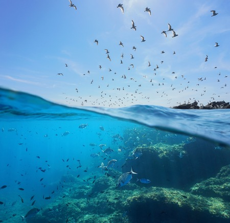 Seabirds (Mediterranean gulls ) flying in the sky and a shoal of fish with rocks underwater sea, split view above and below water surface, Spain, Costa Brava Archivio Fotografico