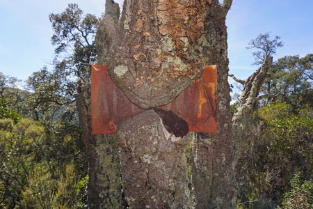An old rusted metal sign engulfed by the growth of a cork oak tree, Darnius, Girona, Alt Emporda, Catalonia, Spain