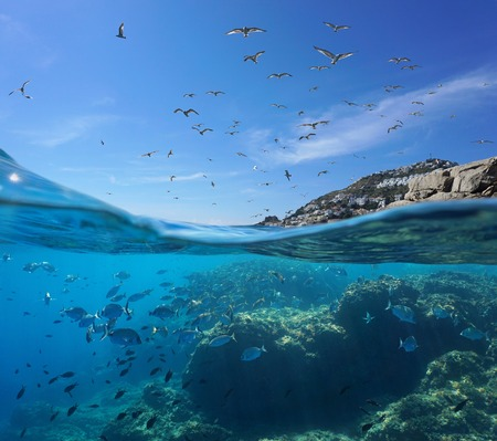 Seabirds flying in the sky and a shoal of fish with rocks underwater, split view above and below water surface, Mediterranean sea, Spain, Costa Brava, Catalonia Stock fotó