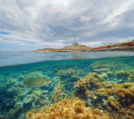 Coast with a lighthouse and fish with algae underwater, split view half above and below water surface, Mediterranean sea, Cabo de Palos, Cartagena, Murcia, Spain Archivio Fotografico