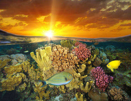 Sunset sky and colorful coral reef with fish underwater sea, split view half above and below water surface, Bora Bora, French Polynesia, south Pacific ocean Archivio Fotografico