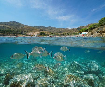 France coastline, Mediterranean beach with seabream fish underwater, split view half above and below sea surface, Peyrefite cove, Pyrenees Orientales, Roussillon, Cote Vermeille