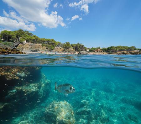 Spain coastline with cormorant on rock and fish underwater, Llanca on the Costa Brava, La Farella beach, split view half over and under water, Mediterranean sea, Catalonia Banque d'images - 117727647