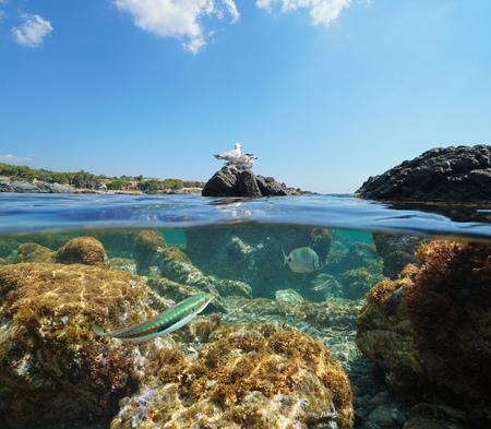 Spain seabird on rock and fish underwater, Mediterranean sea, split view half over and under water, Llanca on the Costa Brava, Catalonia Фото со стока