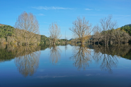 Flooded trees standing in water in a calm lake with reflections on water surface, reservoir of Boadella, Girona, Alt Emporda, Catalonia, Spain Banque d'images - 117727653