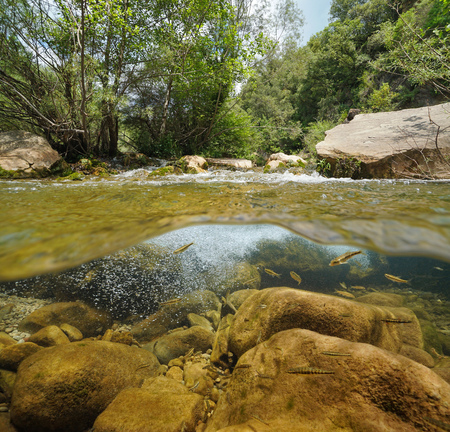 River with rocks and fish underwater (common minnow), split view half above and below water surface, La Muga, Catalonia, Spain Banque d'images - 117727726