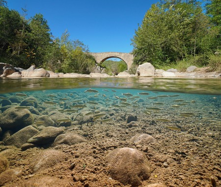 River with an old bridge and a school of fish underwater (chub), split view half above and below water surface, Sant Llorenc de la Muga, Catalonia, Spain Banque d'images - 117727731