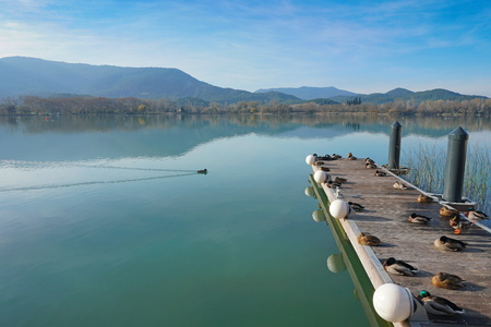 Peaceful view of Banyoles lake with ducks resting on a floating dock, Province of Girona, Catalonia, Spain Banque d'images - 117727732