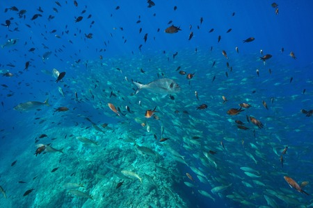 Underwater school of fish in the Mediterranean sea, France Banque d'images - 117727835