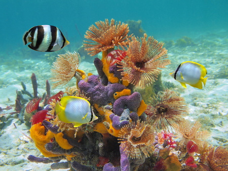 Colorful marine life underwater in the Caribbean sea with worms, sponges and tropical fish Stock Photo