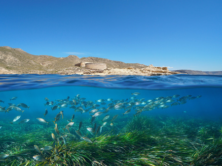 Spain Andalusia coast with a castle and school of fish with Posidonia seagrass underwater Mediterranean sea, el Playazo de Rodalquilar, Almeria, split view half over and under water Banque d'images - 117728068
