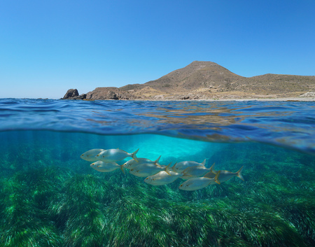 Spain arid coast with fish and seagrass underwater, Mediterranean sea, Cabo de Gata Nijar, Almeria, Andalusia, split view half over and under water Banque d'images - 117728072