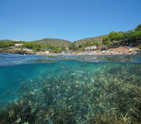 Spain Mediterranean beach vacation with a shoal of fish and sea grass underwater, Roses, Costa Brava, Catalonia, split view half over and under water
