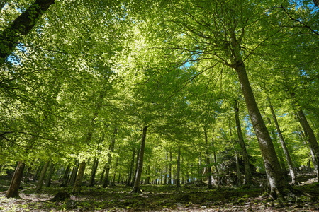 Landscape in the forest under trees foliage, France, Massif des Alberes, Pyrenees Orientales, Occitanie