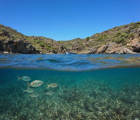 Spain Mediterranean boat in a rocky cove with fish and Posidonia sea grass underwater, Costa Brava, Catalonia, split view half over and under water