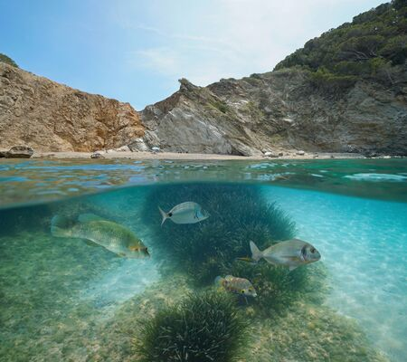 Spain rocky coastline with beach and fish with seagrass underwater, Mediterranean sea, Costa Brava, Sa Tuna, Begur, Catalonia, split view half over and under water Stock Photo