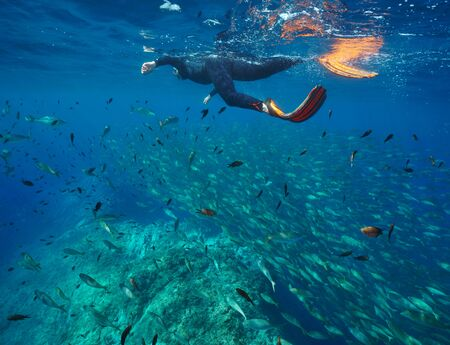 Man snorkeling in Mediterranean sea with many fish underwater, Pyrenees-Orientales, Occitanie, France